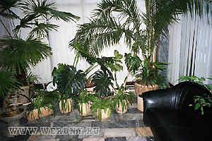 Зимний сад. Корпус № 1 Бекасово база отдыха. Отдых в Подмосковье, Россия санатории, пансионаты, дома отдыха, коттеджи, гостиницы, отели. Туры и путевки, стоимость и цены.